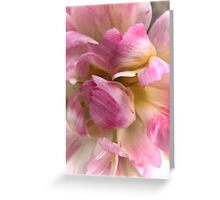 Close-up of a Soft and Frilly Pink & White Tulip ~ Pretty Spring Flower in Bloom Greeting Card