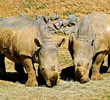 Two Rhinos by BizziLizzy