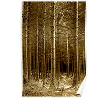 Shearwater Woodland, Wiltshire Poster