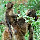 EASY FREE RIDES AT MY AGE ! by Magriet Meintjes