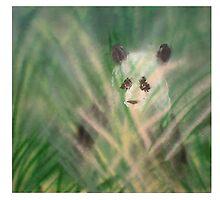 Lovellette Calendar of 2009 by Ginger Lovellette