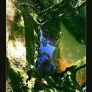 Canaan Downs- Summer Tarn by Evan F.E. Lole