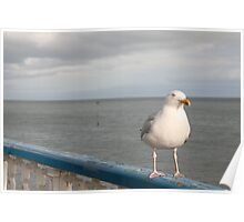 SEAGULL.  Poster