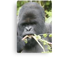 Gorilla Snack Canvas Print