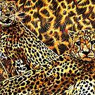 Cheetahs by Anthony Middleton