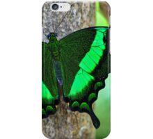 Emerald Swallowtail (Papilio Palinurus) iPhone Case/Skin