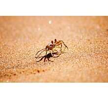 BRAVE HEART - as tiny as a thumbnail! - *MOZAMBIQUE* Photographic Print