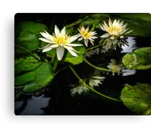 Searching For Monet's Water Lilies Canvas Print