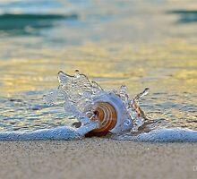 Splish Splash   by Deborah V Townsend