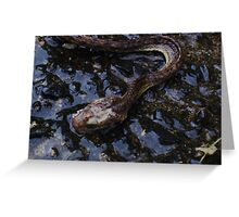 Dead Snake Close up Greeting Card