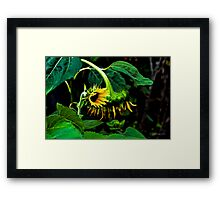 Raise your weary heads Framed Print