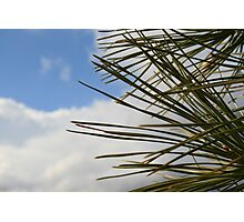 Pine Sky Photographic Print