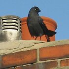 38 - BIRD ON OUR CHIMNEY (D.E. 2007) by BLYTHPHOTO