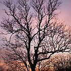 tree with purple skies 2 by wespenspinne