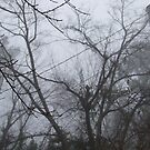 TREES IN THE FOG by Ray1945