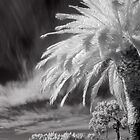 Infrared California Skies by Terry Lynn Reimer