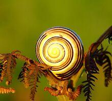 The Golden Snail by Mark  O'Mahony
