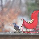 Winter Blue Jay #2 by Pat Abbott