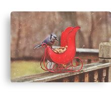 Winter Blue Jay #3 Canvas Print