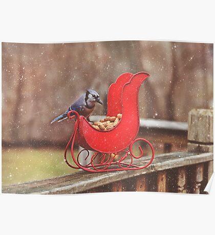 Winter Blue Jay #3 Poster