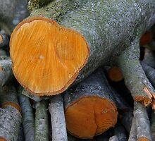 Orange Wood by Melanie PATRICK