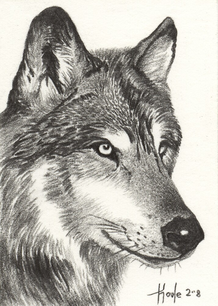 Lone Wolf - Timber Wolf by John Houle