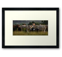 Freaky Cow  Framed Print
