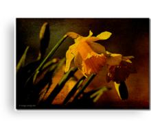 Narcisus Canvas Print