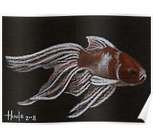 Fancy Gold - Fantailed Goldfish Poster