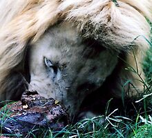White lion red meat by Robert Deaton