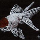 Spot - Oranda Goldfish by John Houle