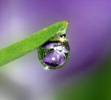 Flower Refraction in Rain Drop by Debbie Sickler