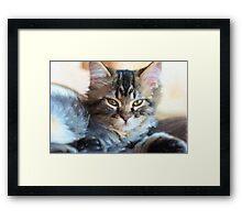 Kitty Cat--mixed media painting Framed Print