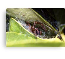Spider's lair Canvas Print
