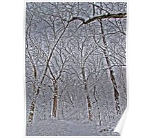 Snow Scenes - HDR Series - Enlightened Forest Poster