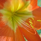 Orange And Yellow by Cristel Gous-Veefkind