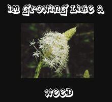 WEEDS by Jennifer Johnson