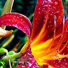 raindrops on lillies  by LoreLeft27