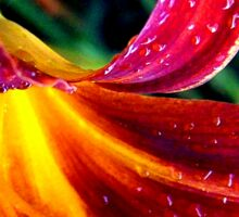 raindrops on lillies  Sticker