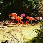 Flamingo's by Ashley Berge