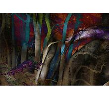 Funky Woods - JUSTART © Photographic Print