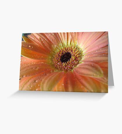 Passionate Peach Greeting Card