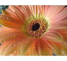 Passionate Peach Photographic Print