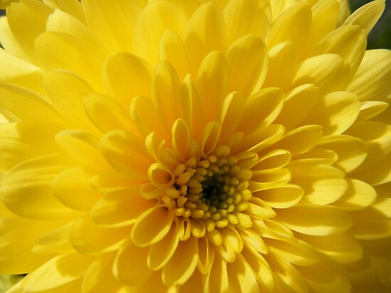 Yellow Flower by olwen Fisher