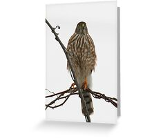 I see you!! Greeting Card
