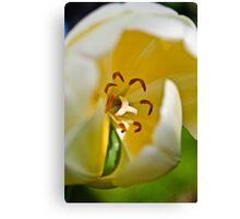 Anatomy of a Tulip: Slice of Life Canvas Print
