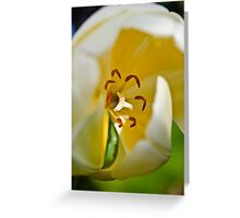 Anatomy of a Tulip: Slice of Life Greeting Card