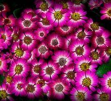 fiori 2 by jerry  alcantara