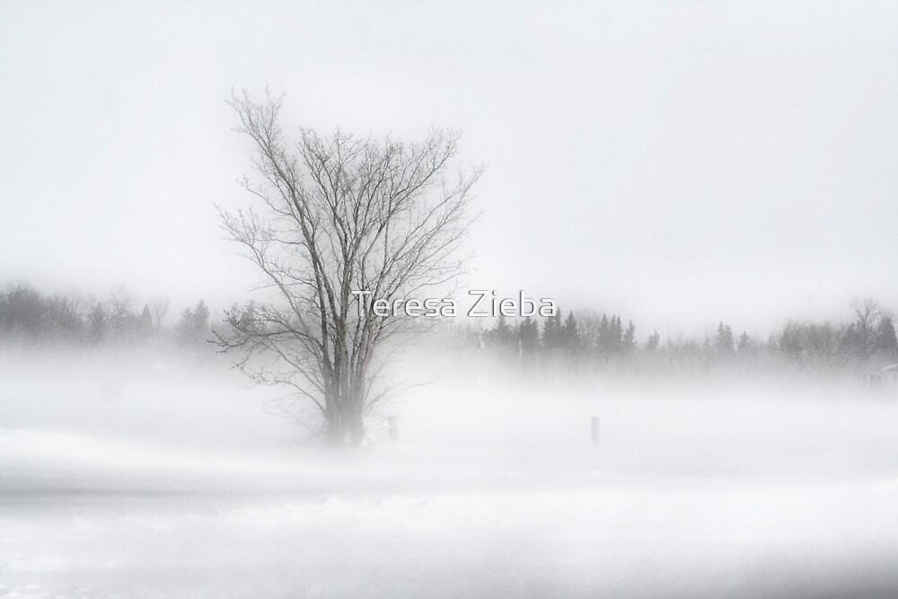 Winter Storm by Teresa Zieba