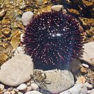 A Crab Walks Up To An Anemone by MichelleRees